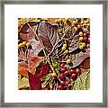 Autumn Berries And Leaves Background  Framed Print