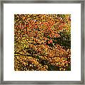 Autumn Colors In Pa Framed Print