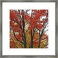 Autumn Duel Framed Print by Todd Sherlock