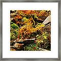 Autumn Ferns On Pickle Creek At Hawn State Park Framed Print