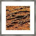 Autumn Forest Floor Framed Print