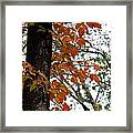 Autumn Glory At Tannehill Framed Print