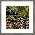 Autumn Horsetail  Framed Print