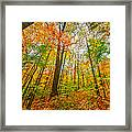 Autumn In The Hocking Hills Framed Print