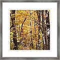 Autumn Path 2 Framed Print