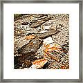 Autumn Rusted Framed Print
