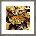 Autumn Tears Framed Print