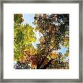 Autumn Trees Low-angle Framed Print