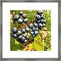 Autumn Viburnum Berries Series #3 Framed Print