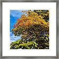 Autumnal Fruition Framed Print