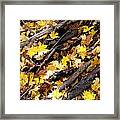 Autumnal Melody Framed Print