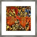 Autumn's Gold Framed Print