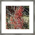 Autumns Red Vines Framed Print