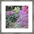 Azalea Trail Framed Print