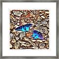 Azul Framed Print
