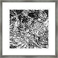 B-w 0502 Framed Print