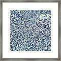 Bacteria, Phase Contrast Framed Print
