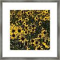 Balsamroot Field In Grand Teton Framed Print