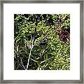 Bamboo And Tree Leaves Framed Print