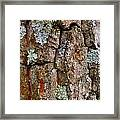 Bark At Me Framed Print