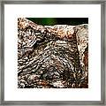 Bark Framed Print by Christopher Gaston