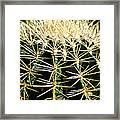 Barrel Cactus Framed Print