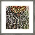 Barrell Cactus II Framed Print