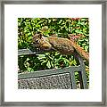 Basking Squirrel Framed Print
