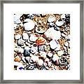 Beach Shells Framed Print