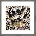 Bears Here Framed Print