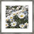 Beautiful Daisies Framed Print