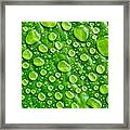 Beautiful Green Leaf With  Water Drops Framed Print