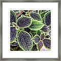 Beautiful Primordial Life  Framed Print by Elena Tudor