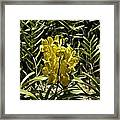 Beautiful Yellow Flowers Inside The National Orchid Garden In Singapore Framed Print