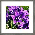 Bell Flowers Framed Print