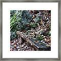 Bench Beside The Trail To Cascade Falls Framed Print