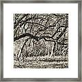 Bent Trees Sepia Toned Framed Print