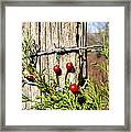 Berries And Barbs Framed Print