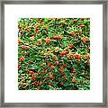 Berries In Profusion Framed Print