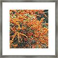 Berry Orange Framed Print