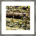 Berry Picker Framed Print