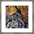 Big Autumn Tree In Fall Park Framed Print