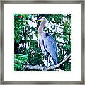 Big Bird - Great Blue Heron Framed Print