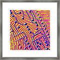 Biometric Fingerprint Scan Framed Print by Pasieka