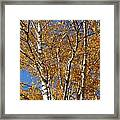 Birch Beauty Framed Print