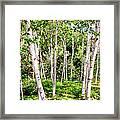 Birch Path Framed Print