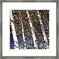 Birch Trees In Fall Framed Print