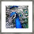 Bird Beauty Framed Print