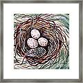 Bird Nest And A Feather Framed Print