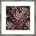 Birds In Copper Framed Print